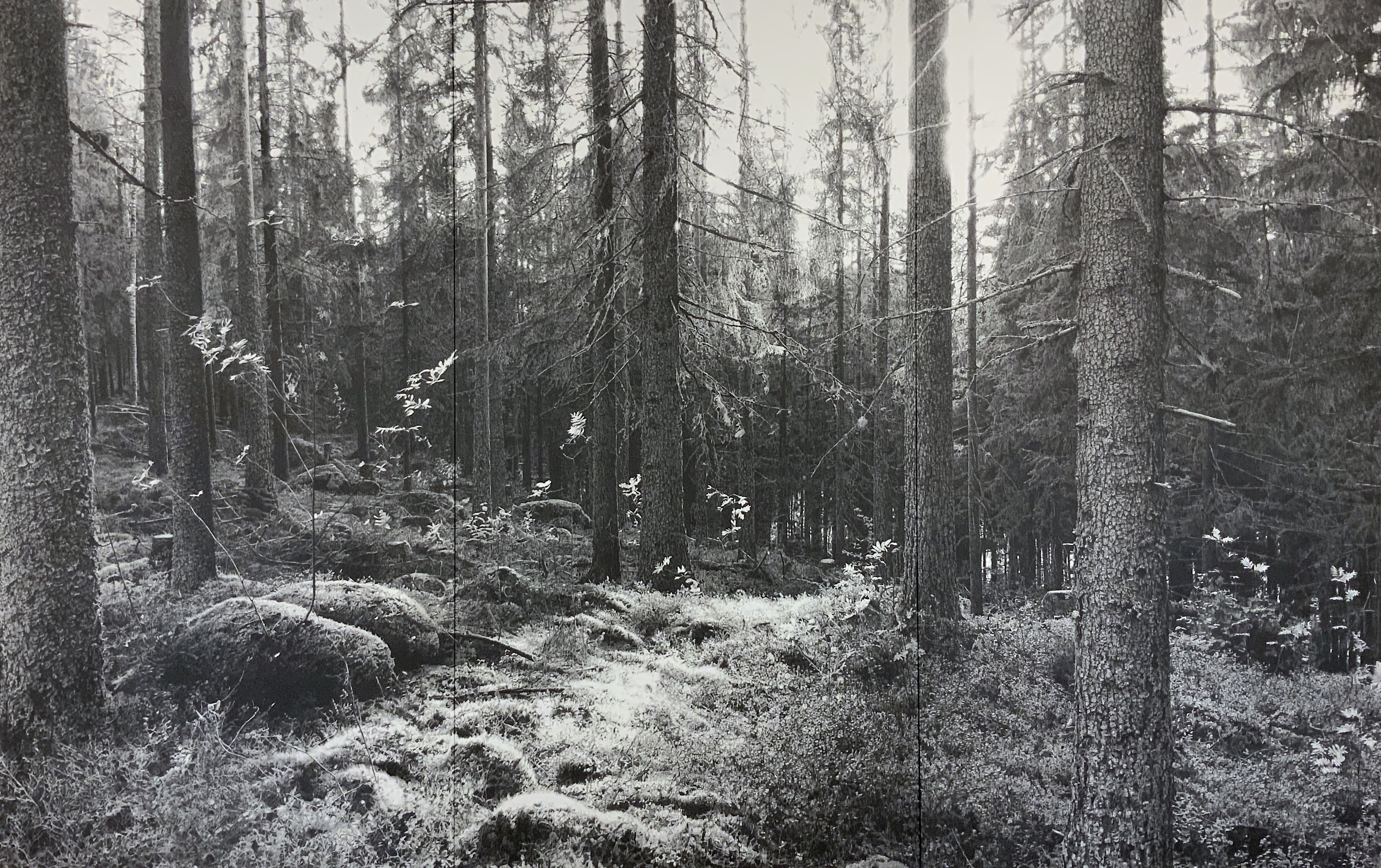 inline_75_https://galerie-lauth.de/wp-content/uploads/2019/01/《Forest》-2019-180-×-285cm-紙に黒鉛、純金泥、顔料.jpg