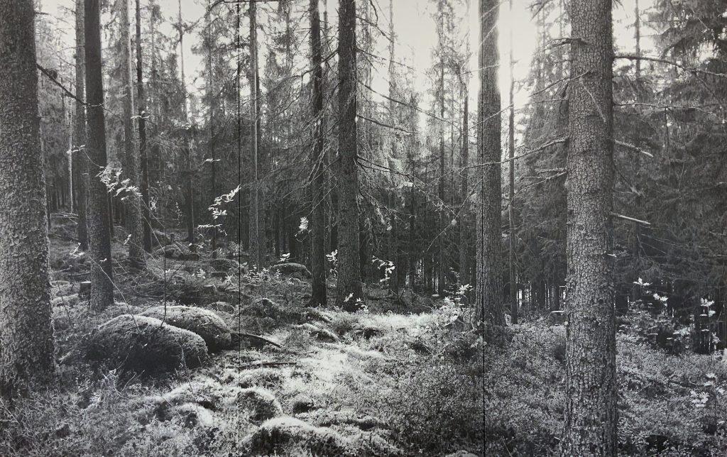 Premiere in Deutschland auf der Art Karlsruhe Yuichiro Sato