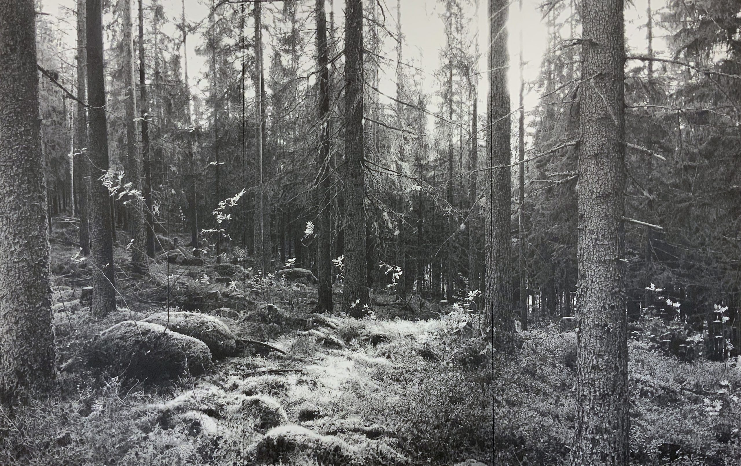 """""""Forest"""" 2019 180 x 280cm Bleistiftzeichnung mit Goldpigmenten"""